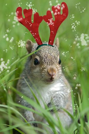 Squirrel Reindeer