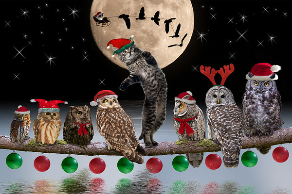 Owl Helpers with Asio