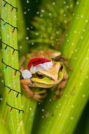 Treefrog Christmas