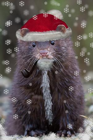 Mink Santa