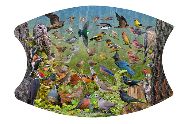 Backyard Birds of the West ID Poster