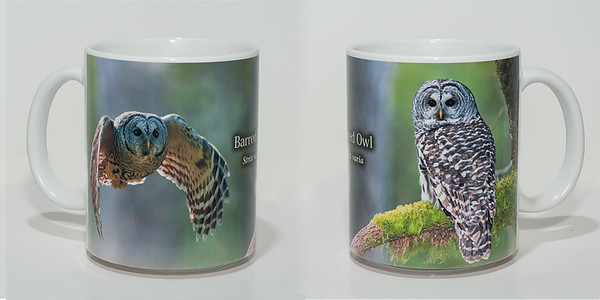 Barred owl Mug 003