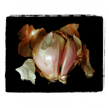 Onion Cards