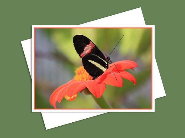 Shirley Richardson Butterfly Garden, Assiniboine Park