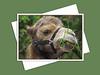 Bactrian Camel, Assiniboine Park Zoo