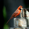 What?  Suet is an Easy Way to Feed Hungry Kids