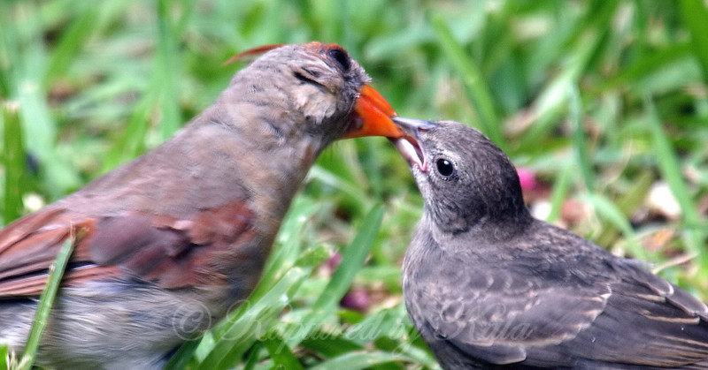 Close Up Of The Feeding