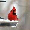 Stop Snowing On My Birdseed!
