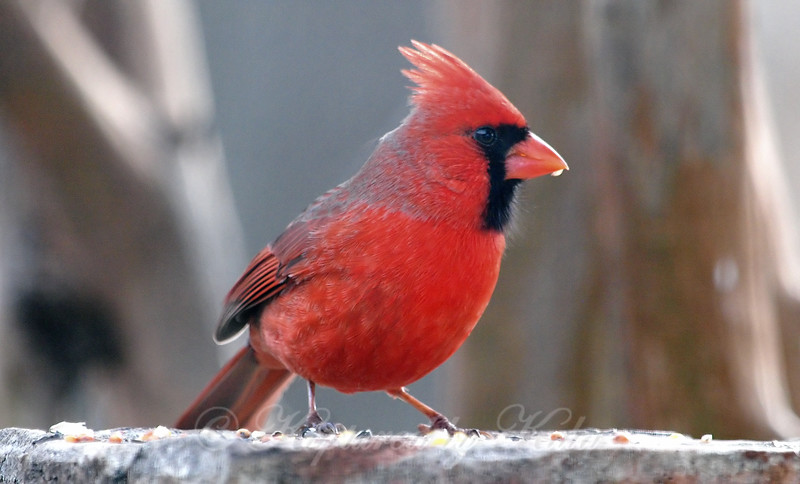 Up Close And Personal With A Cardinal View 2