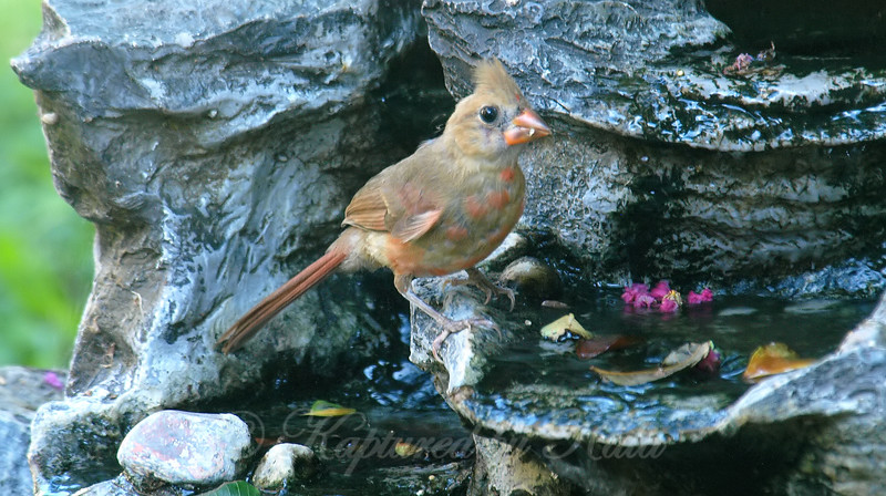Cute Youngster At My Fountain