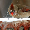 How to Find Birdseed Under the Snow