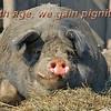 Pignity