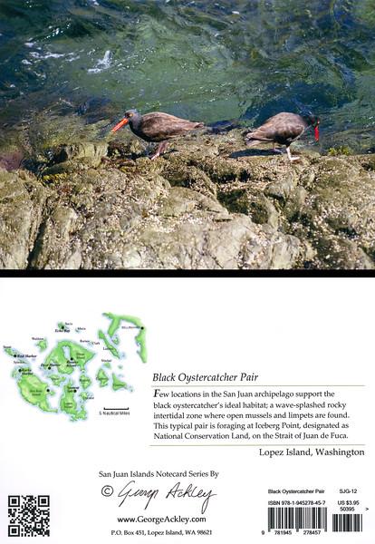 Black Oystercatcher Pair