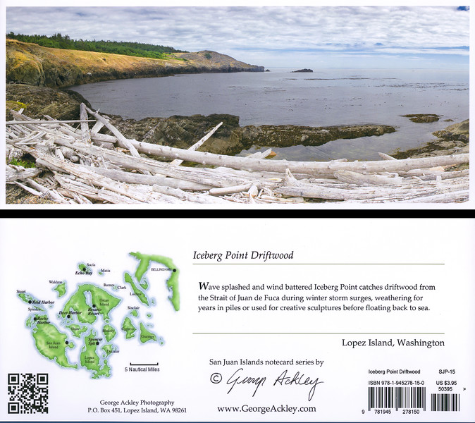 Iceberg Point Driftwood
