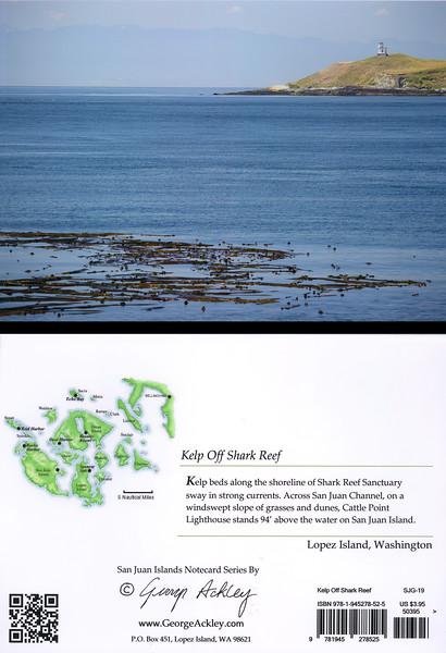 Kelp at Shark Reef