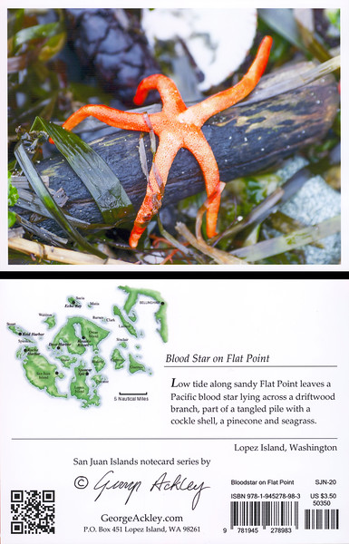 Blood Star on Flat Point