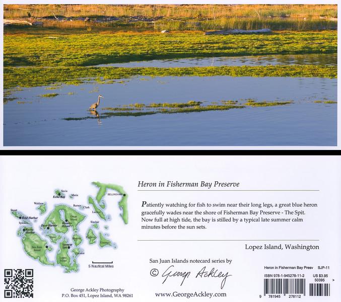 Heron in Fisherman Bay Preserve