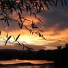 Bamboo sunset~