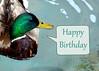 duck 41914_0978 3