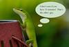 gecko w tude