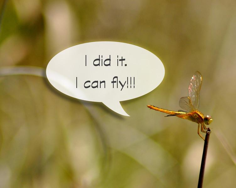 dragonfly_0477 2