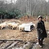 Ma with the sheep Thorrington 1989