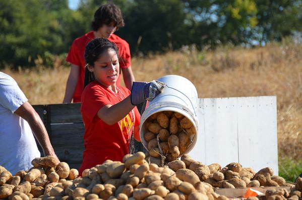 Potato Project 9-13