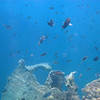 Snorkeling in Aruba