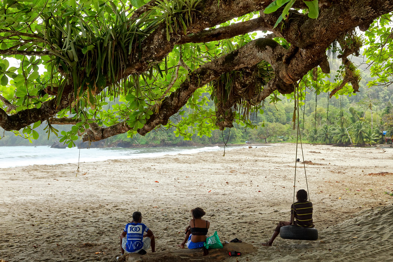 Under the giant almond tree at Grande Riviere beach