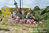 Anegada Island is a sanctuary for pink flamingos.