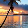 Palm Tree and Sunset, Secret Harbor, St. Thomas
