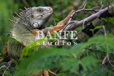 Vieques-NL-DanBanfe-9682