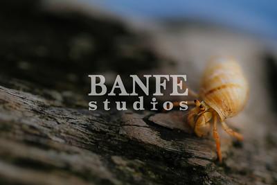 Vieques-NL-DanBanfe-8981
