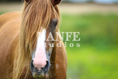 Vieques-NL-DanBanfe-1388