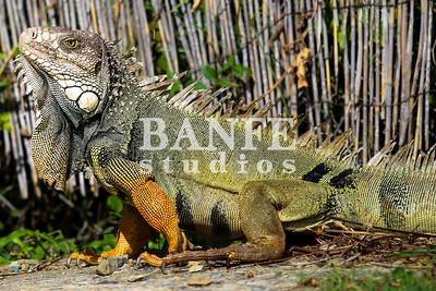 Vieques-NL-DanBanfe-8009