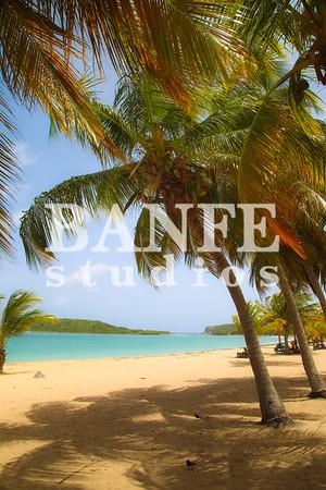 Vieques-NL-DanBanfe-4528-2