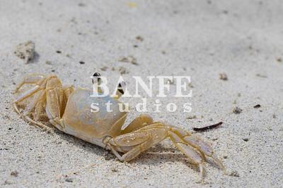 Vieques-NL-DanBanfe-7925