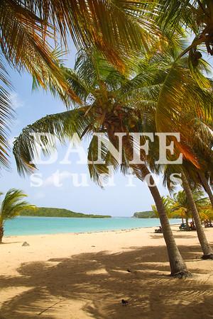 Vieques-NL-DanBanfe-4528