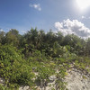 Tropical vegetation - Caribbean paradise found on the white sandy beaches of Half Moon Cay Bahama