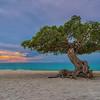 The Divi Divi Tree on Aruba Beach - fofoti tree