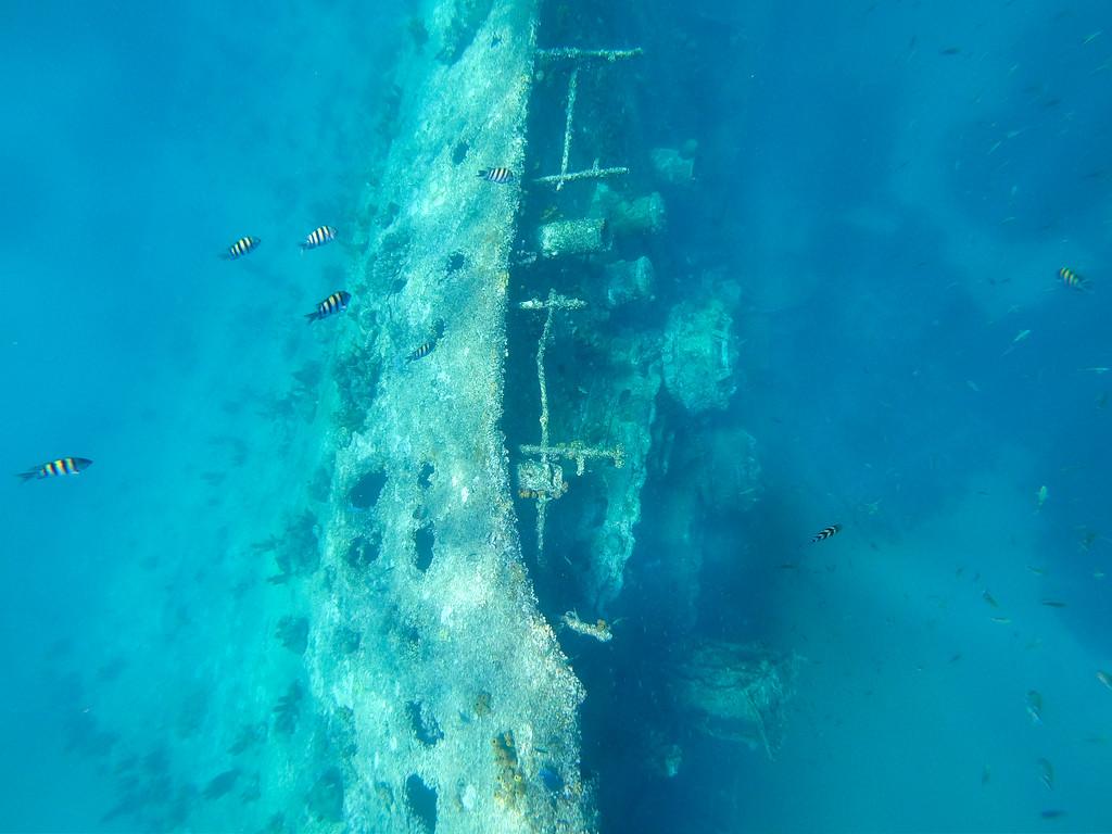 Snorkeling over a shipwreck in Aruba
