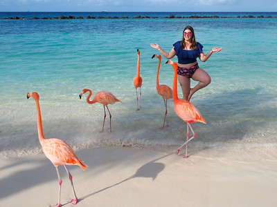 Flamingos on Renaissance Private Island in Aruba