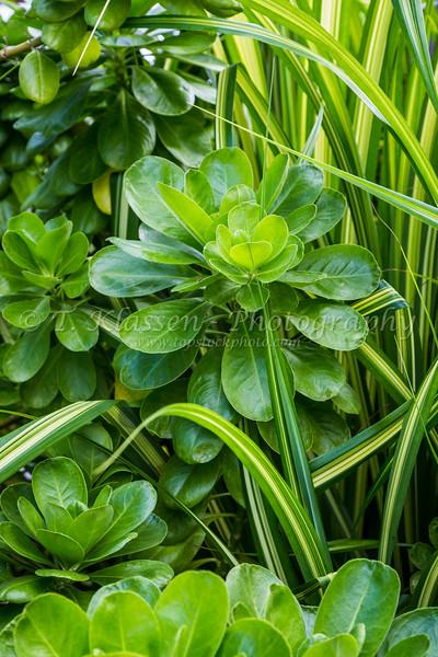 Tropical vegetation on Princess Cays, Bahamas.