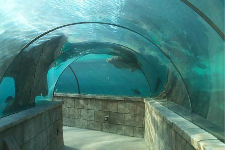 Inside the Atlantis Aquarium in the Bahamas