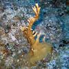 Reef - Black Beards, Bahamas
