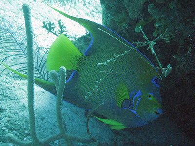 Nassau (Scuba)