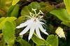 Tropical flowers and vegetation on Half Moon Cay, Bahamas, Caribbean.