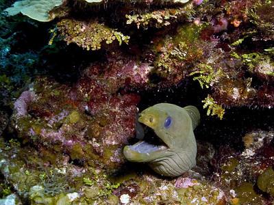 Ambergris Caye (Creatures)