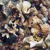 Fish - Ambergris Caye, Belize