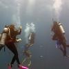 Reef - Ambergris Caye, Belize